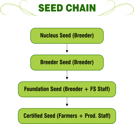 SEED CHAIN - png