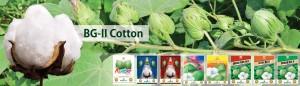 1 - Cotton