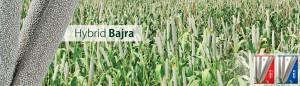 4 - Bajra