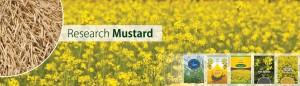 5 - Mustard