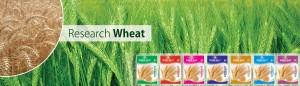 6 - Wheat
