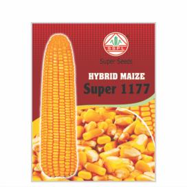 SUPER 1177